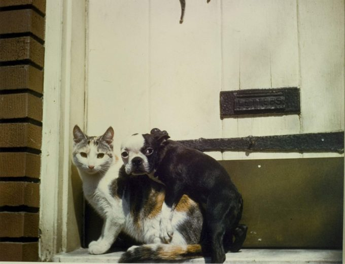 Armand Agresti, Richmond Hill New York Dog and Cat