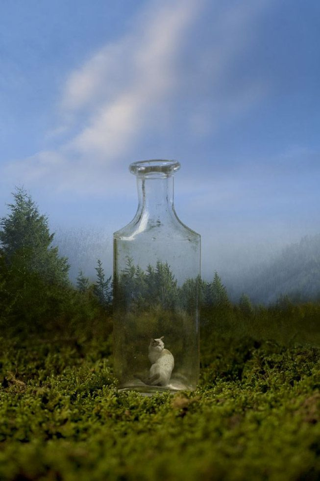 Bottle in the Woods