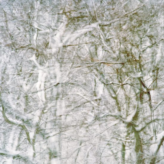Frank Yamrus, trees in snowstorm at Snail Road (3), Provincetown