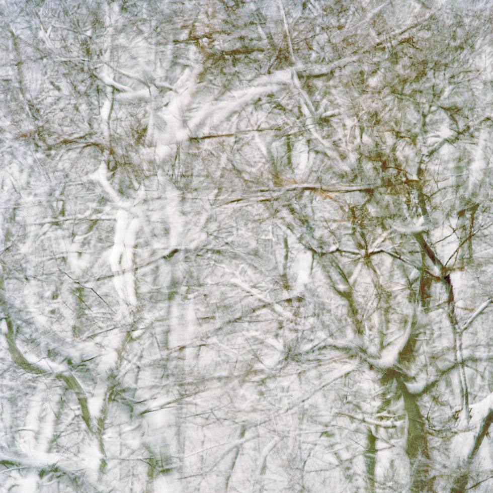 trees in snowstorm at Snail Road (3), Provincetown