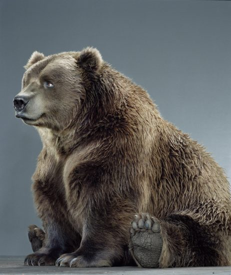 Jill Greenberg, Untitled Ursine 49F-54