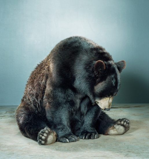Jill Greenberg, Untitled Ursine 88K-41
