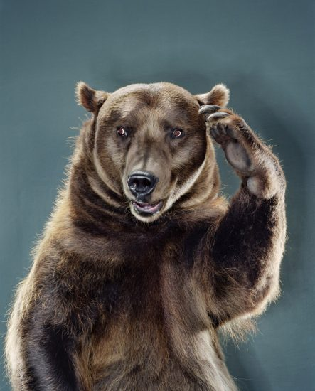 Jill Greenberg, Untitled Ursine 94L-43