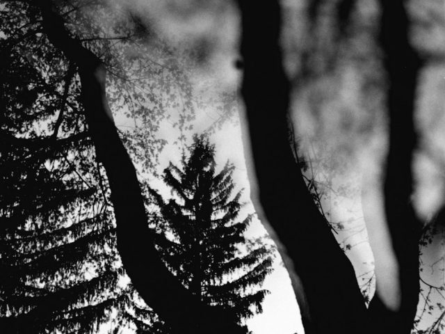 Dave Anderson, Night Trees