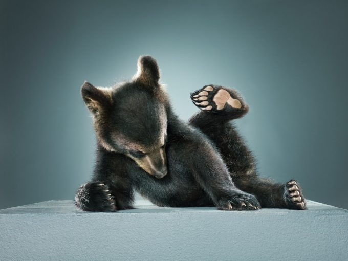 Jill Greenberg, Untitled Ursine 292-1