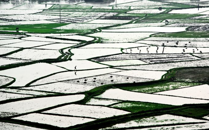 Stephen Wilkes, Lone Man in Rice Paddy