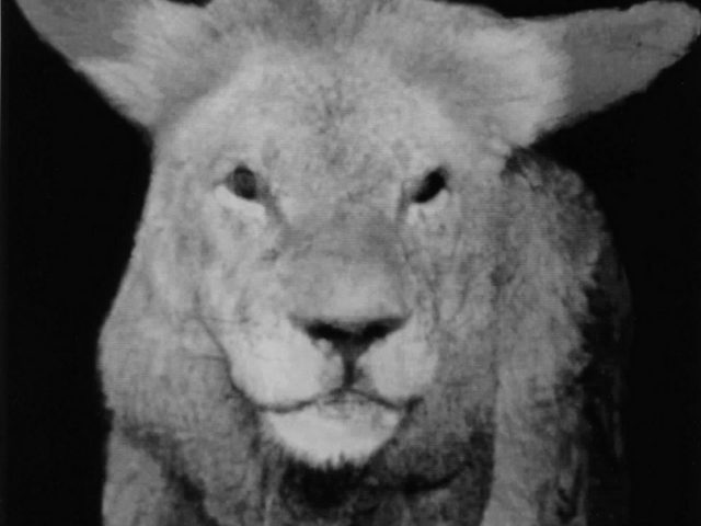 Nancy Burson, Lion Lamb