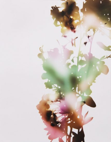 James Welling, 001, E+B (from Flowers)