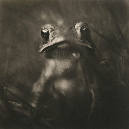 Johndrow_Toad-980