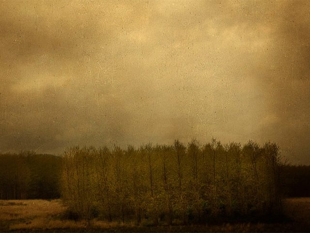 Marc Yankus, Row of Trees