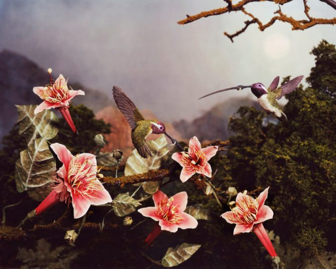 Lori Nix, Hummingbirds