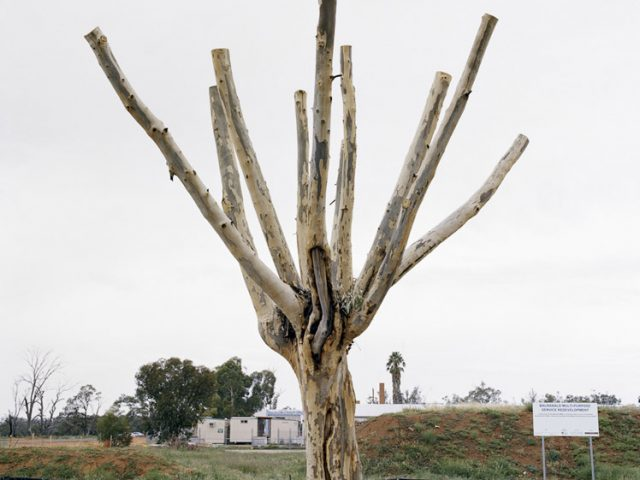 Amy Stein, Cut Down Tree I, Balranald