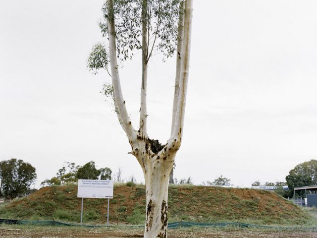 Amy Stein, Cut Down Tree II, Balranald