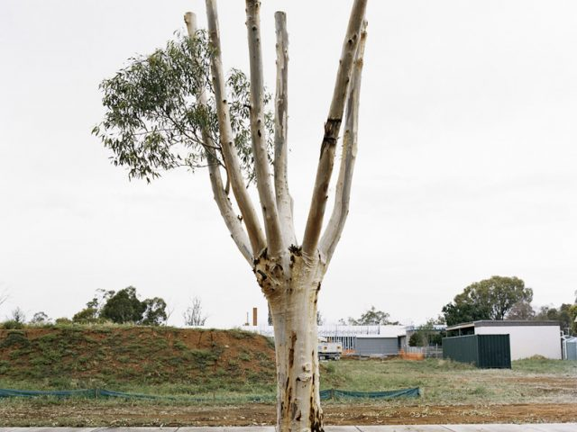 Amy Stein, Cut Down Tree III
