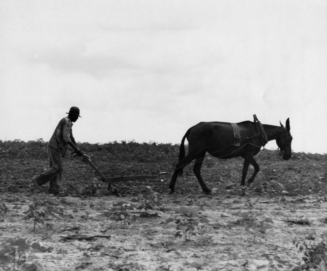 Dorothea Lange, Cotton Sharecropper's Unit