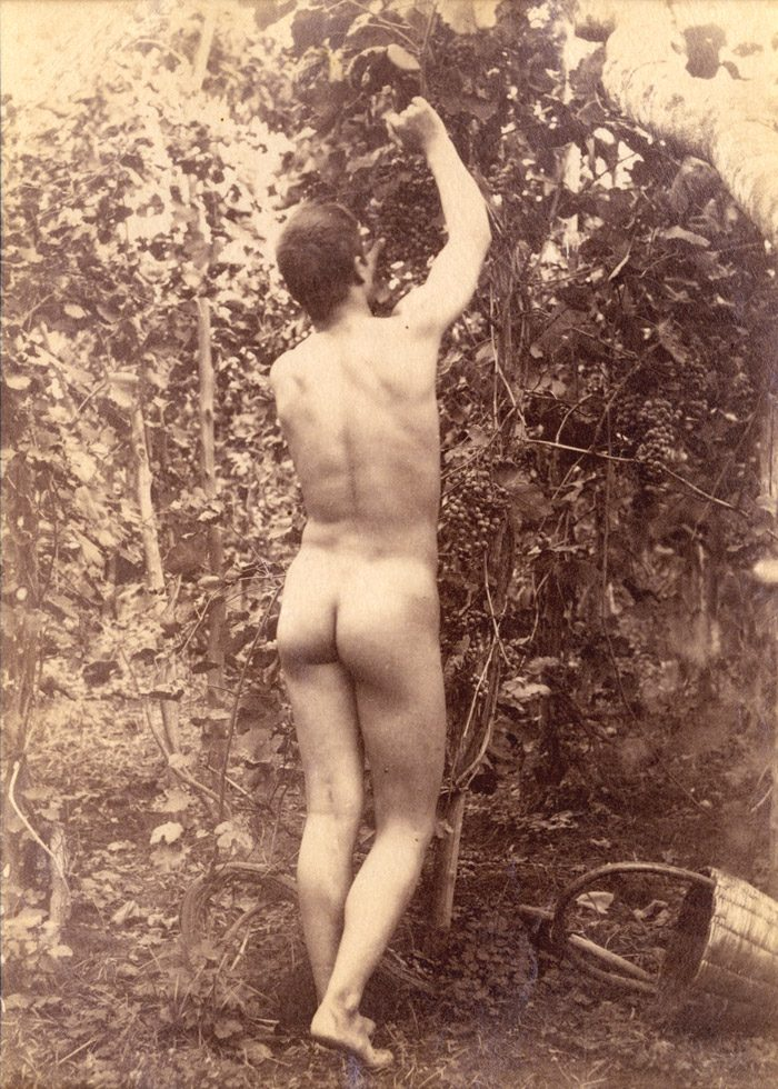 Gugliemo Pluschow, Nude Male Picking Grapes