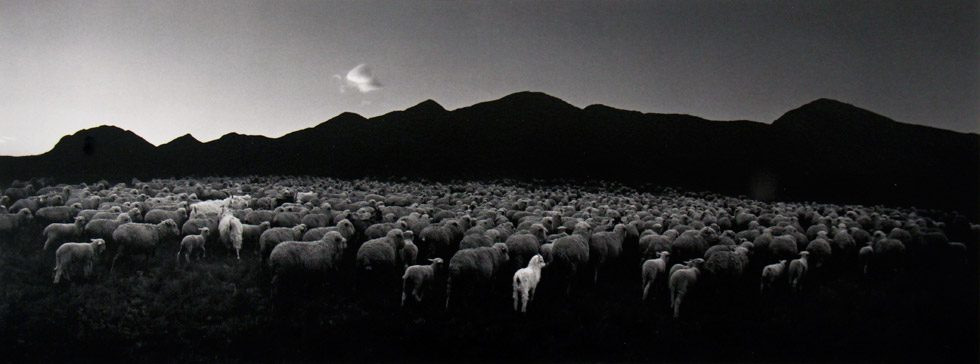 Barun-Khemchik, Tuva, Siberia (Flock of Sheep and Goat)