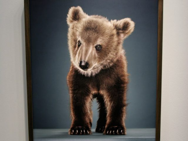 Jill Greenberg, New-Bears,Exhibition Image 2