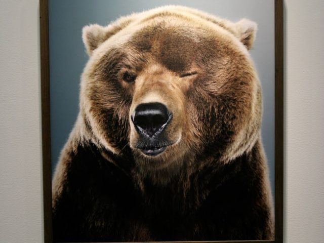 Jill Greenberg, New Bears, Exhibition 4