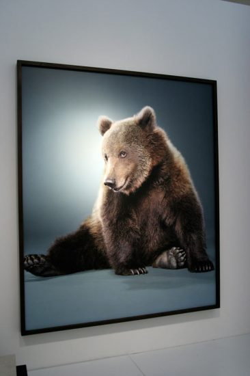 Jill Greenberg, New Bears Exhibition 5