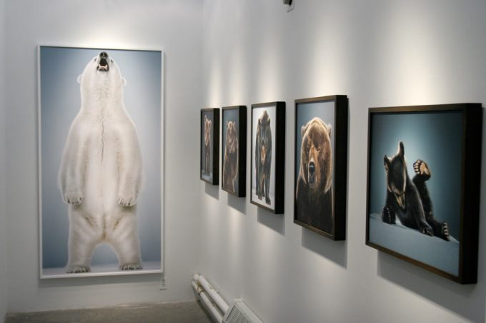 Jill Greenberg, New Bears Exhibition