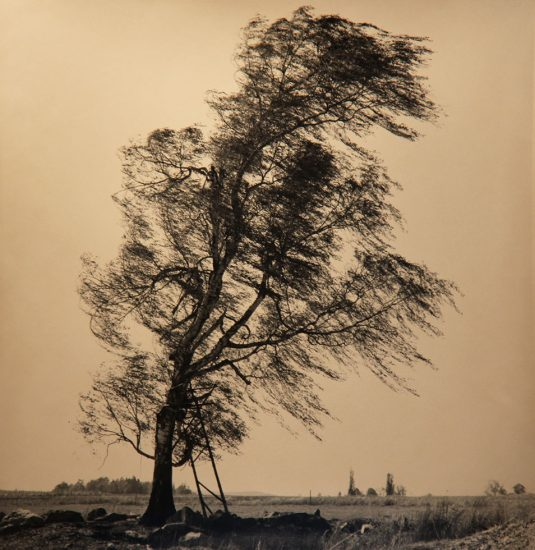 Rick Chapman, Tree with Wind, Czech Republic
