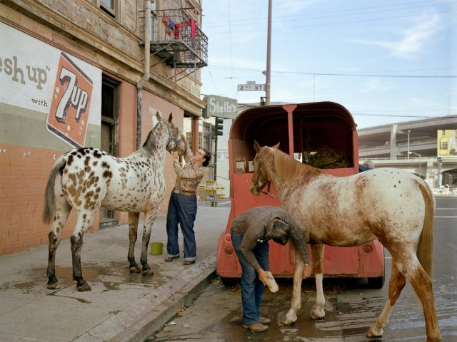 Janet Delaney, Skip Wheeler and his wife groom their horses after Veteran's Day Parade, Folsom at 2nd Street