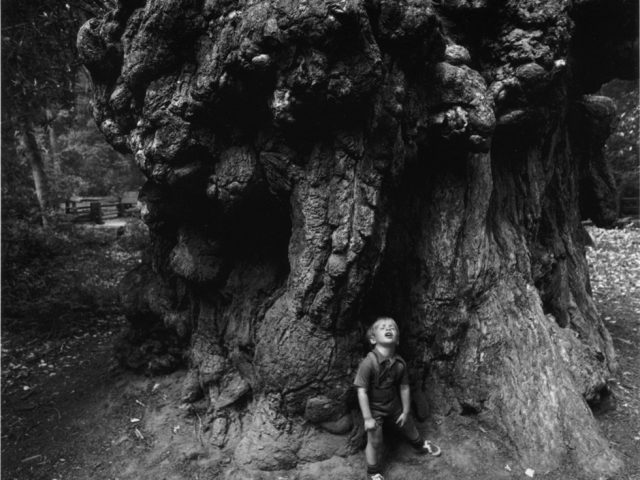 Arthur Tress, Boy Under Redwoods