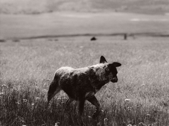 Michael Crouser, Heeler, Burns, Colorado