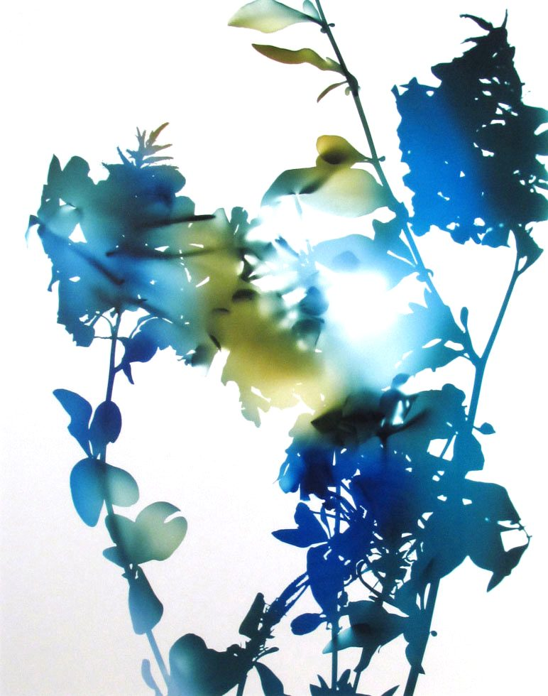 """010B (from """"Flowers"""")"""