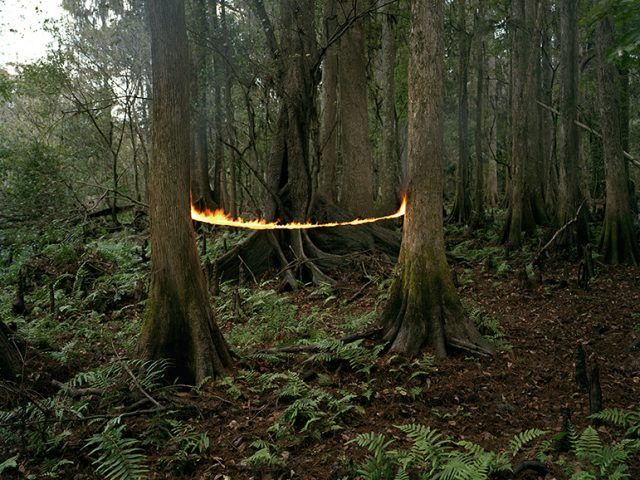 Fire and two trees