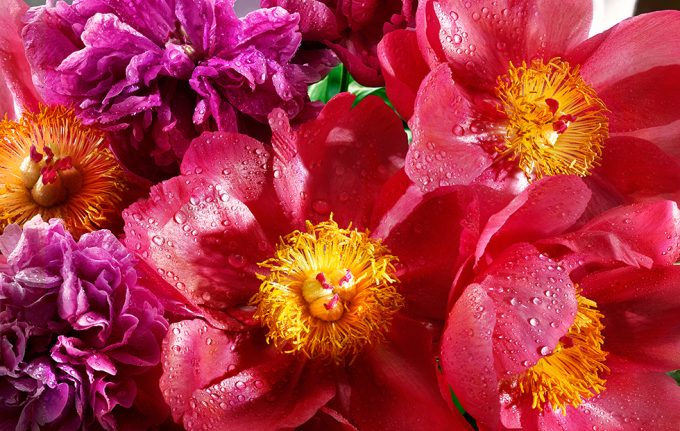 David Bishop, Edible Flowers: Flame Peony