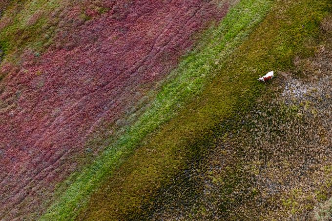 Zack Seckler, Eastern Cape Bull