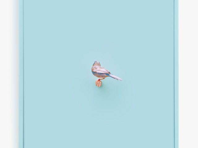 Daniel Handal, Cordon Bleu Finch (Clear Day)