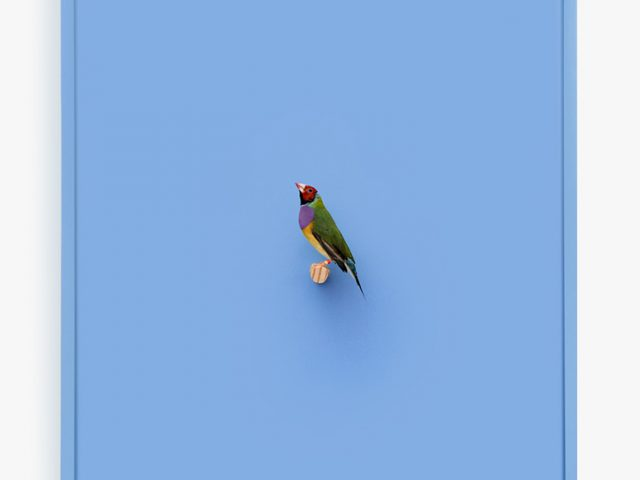 Daniel Handal, Gouldian Finch (Ray of Power)
