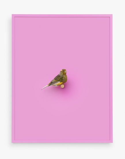Daniel Handal, Atlantic Canary (Santa Monica)