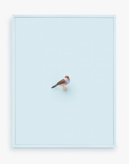 Daniel Handal, Orange Cheeked Waxbill (Whisper)