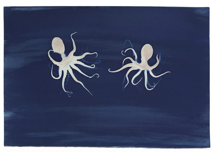Brian Buckley, Octopus (Twins)