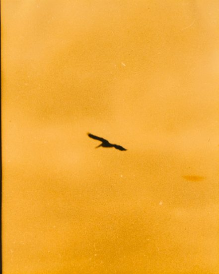 Mark Morrisroe, Untitled, Bird