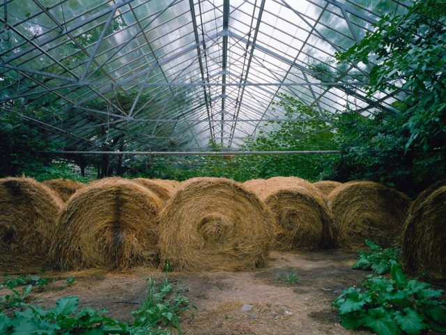 Pipo Nguyen-duy, Untitled (Hay, 02.2006)