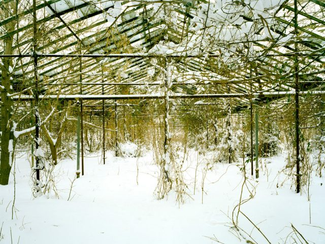 Pipo Nguyen-duy, Untitled (Snow, 03.2010)