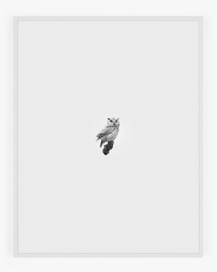 Daniel Handal, Screech Owl, Red Phase