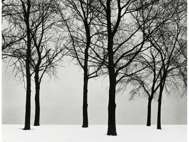 Harry Callahan, Chicago (Trees at Lake Shore)