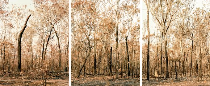 Olaf Otto Becker, After a Bushfire, Australia, 2008
