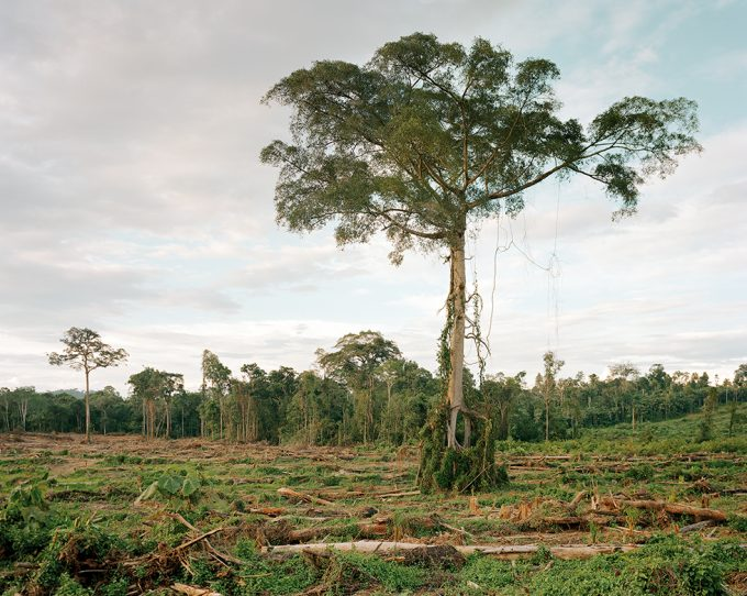 Olaf Otto Becker, Deforestation of Primary Forest, Central Kalimantan, Indonesia, 03/2012