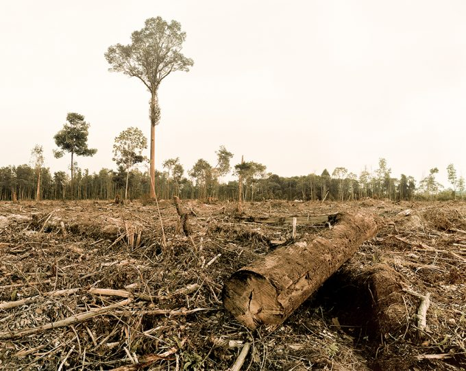 Olaf Otto Becker, Deforestation, Riau Area, Sumatra, Indonesia, 10/2013