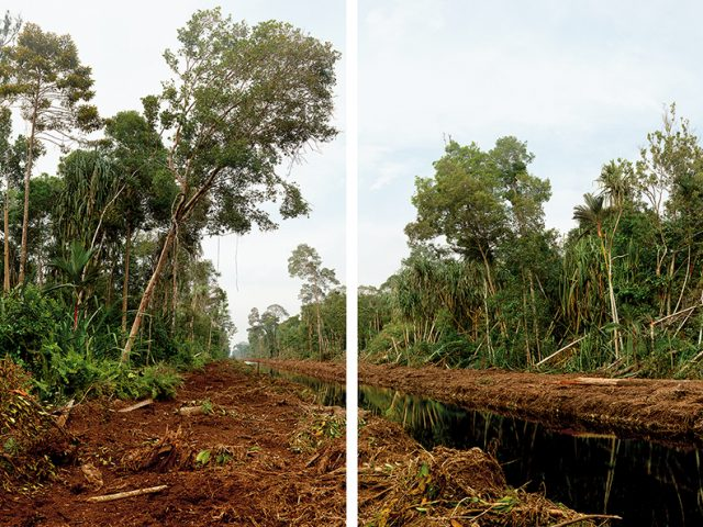 Diptych, Deforestation of 800,000 Hectares of Swamp Forest, Sumatra, Riau Area, Rangsang Island, 03/2012