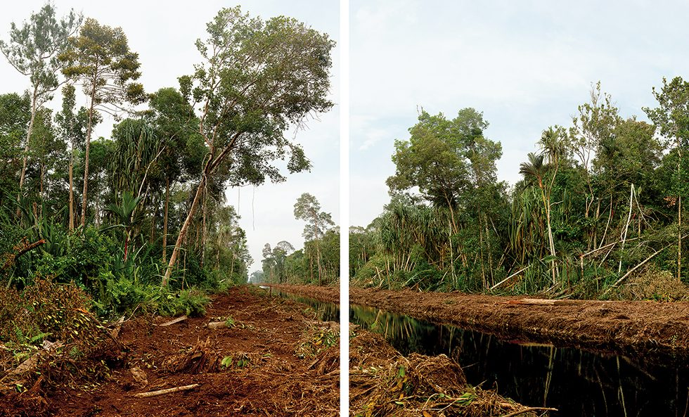 Diptych, Deforestation of 800,000 Hectares of Swamp Forest, Riau Area, Rangsang Island, Sumatra, 03/2012
