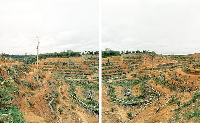 Diptych, Illegal Deforestation of Primary Forest, Tumbang Kalang