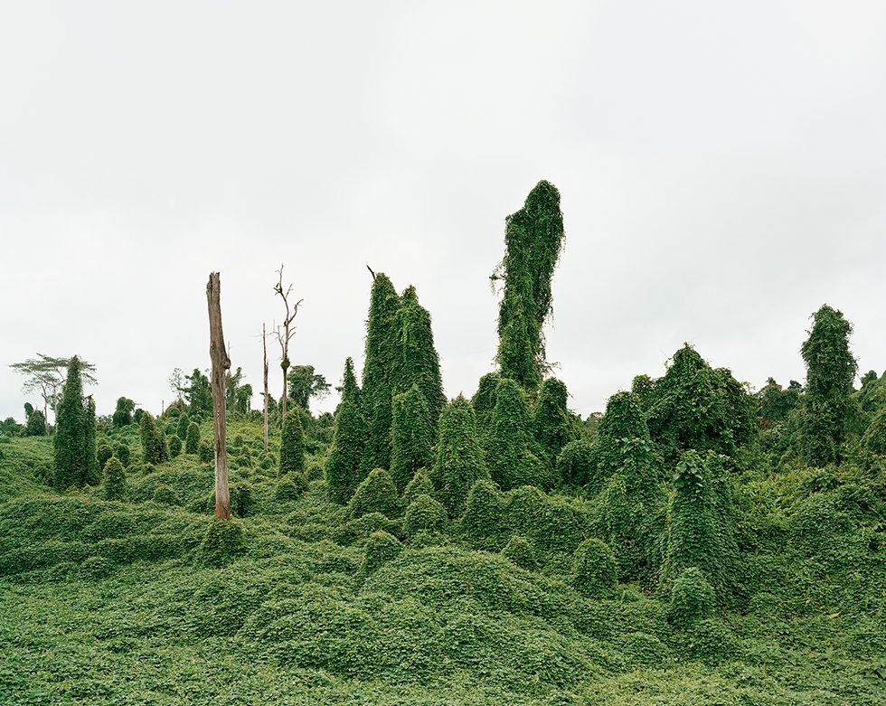 Ghost Trees After Deforestation, Malaysia, 10/2012
